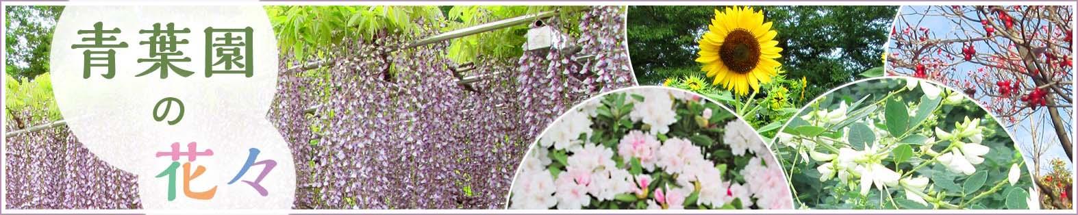 青葉園の花々