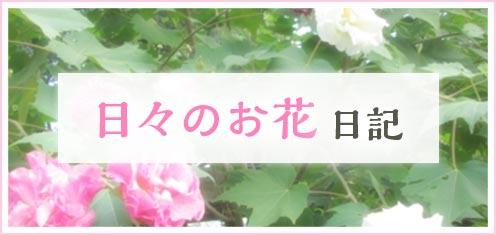 日々のお花日記